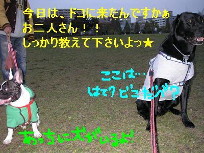 20061106222008.jpg