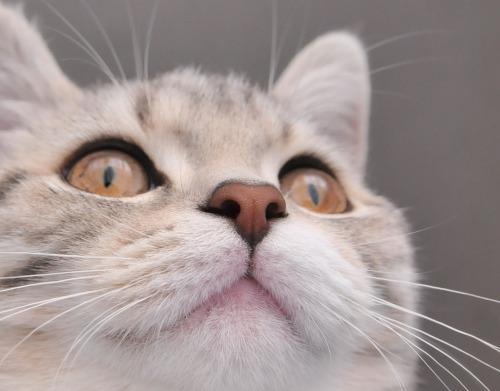 まりんの鼻