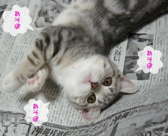 おじゃま猫1