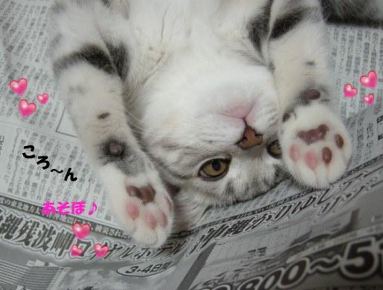 がぶり猫2