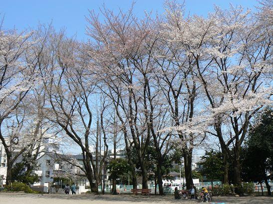 北野公園の桜012