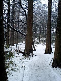 080203_1205~0001セコイヤの木々