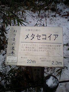 080203_1620~0001雪の石神井公園メタセコイヤの看板