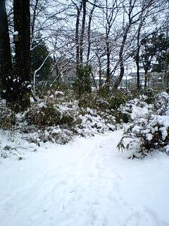 080203_1220~0001雪の石神井公園帰り道