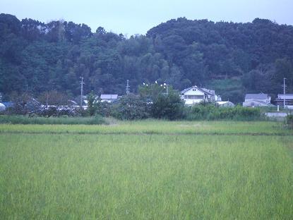 20061007001029.jpg