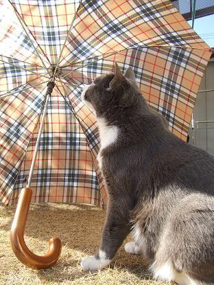3雨に濡れて大変だな