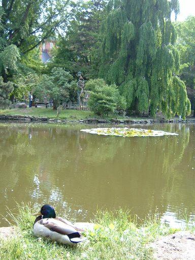 道庁赤レンガの池