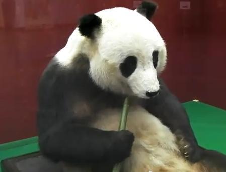 パンダ、カンカン