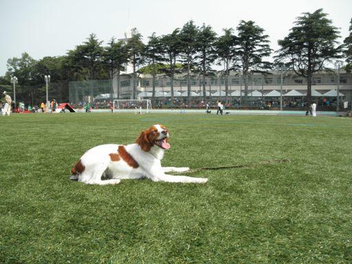 リープ201106大磯 021s