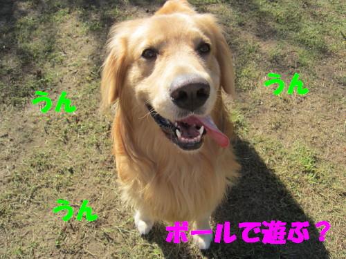 コピー (1) ~ IMG_8885