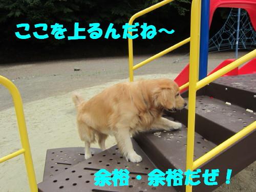 IMG_8517.jpg