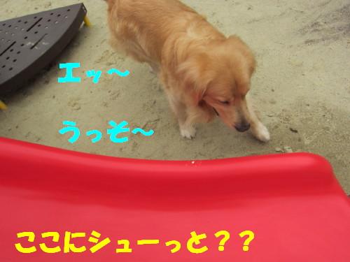 IMG_8522.jpg