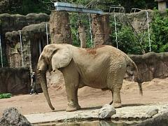 画像 152象