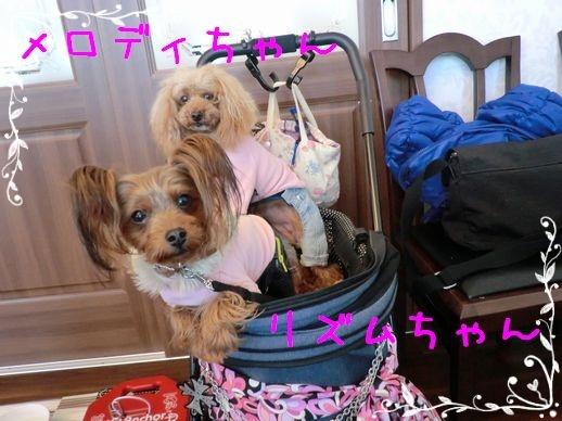 メロちゃん&リズちゃん