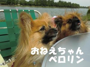 040繝シ繧ウ繝斐・繧ウ繝。繝ウ繝・convert_20110601212422