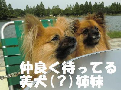 043繝シ繧ウ繝斐・繧ウ繝。繝ウ繝・convert_20110603102311