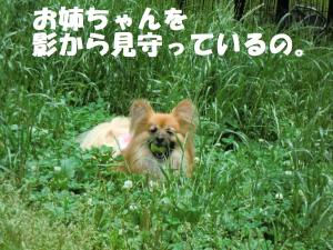 018繝シ繧ウ繝。繝ウ繝・convert_20110616214650
