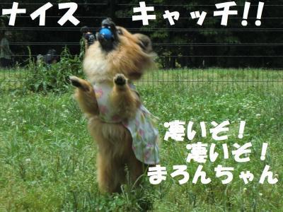022繝シ繧ウ繝。繝ウ繝・convert_20110616214739
