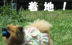 021繝シ繧ウ繝斐・繧ウ繝。繝ウ繝・convert_20110616214759