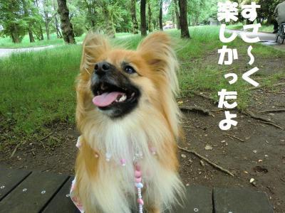 026繝シ繧ウ繝。繝ウ繝・convert_20110616214907
