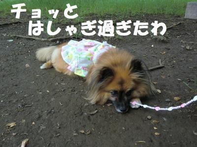 027繝シ繧ウ繝。繝ウ繝・convert_20110616214929