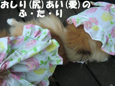 030繝シ繧ウ繝。繝ウ繝・convert_20110616214954