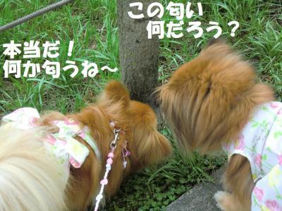 042繝シ繧ウ繝。繝ウ繝・convert_20110616215231