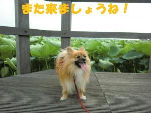 021繝シ繧ウ繝。繝ウ繝・convert_20110706212018