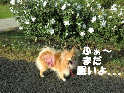 008繝シ繧ウ繝。繝ウ繝・convert_20110720213259