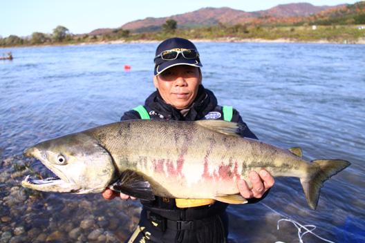 2011 荒川サケ有効利用釣獲調査 荒川鮭釣り 爆釣爆笑会