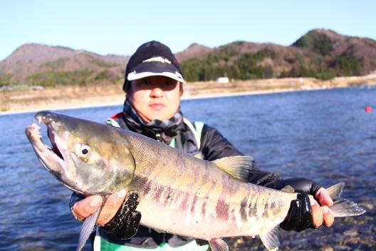 2011荒川鮭釣り