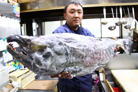 2011荒川鮭釣り 10キロ 一番大きい鮭