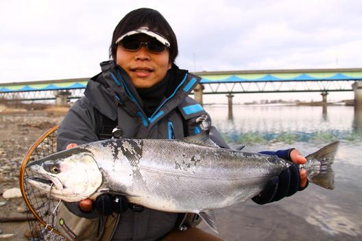 2012荒川サクラマス釣り