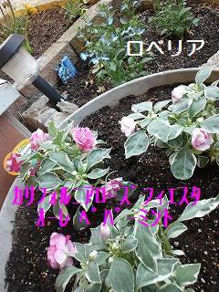 m-11051804.jpg