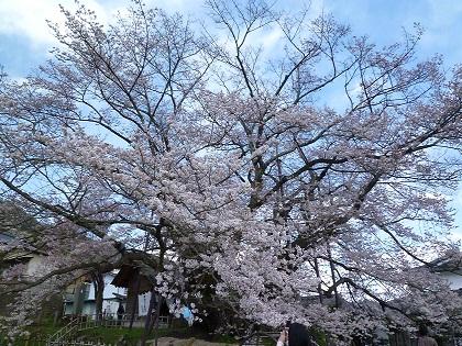 素桜神社・神代桜
