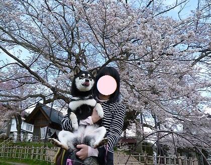 素桜神社にて