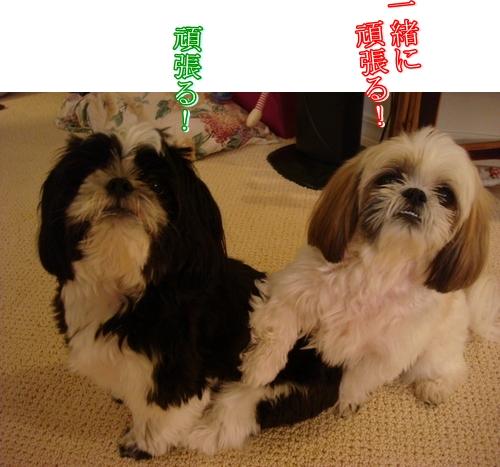 DSC08696moji.jpg