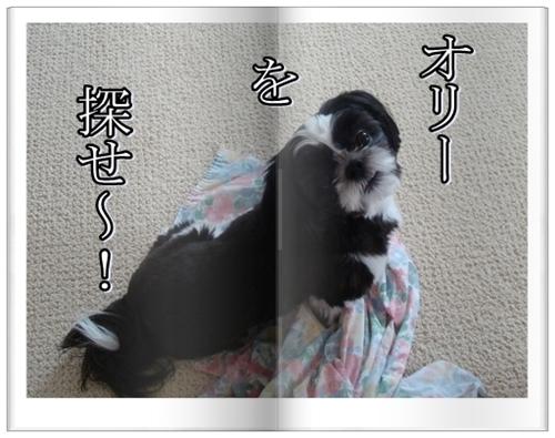 DSC08792-vertmoji.jpg