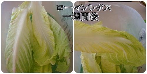 pageDSC08743x2moji.jpg
