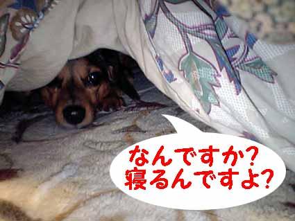 そんな眠いのか!?