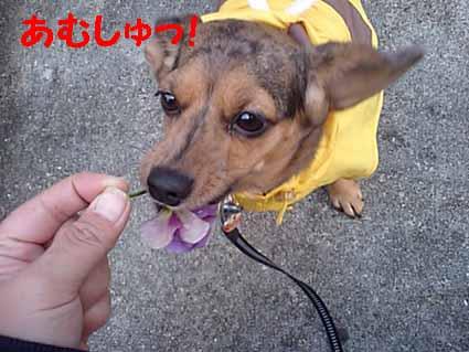 花は食べるモノ!?