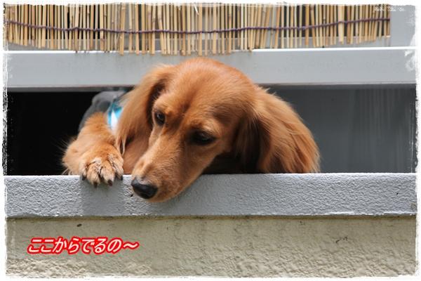 IMG_4125-1.jpg