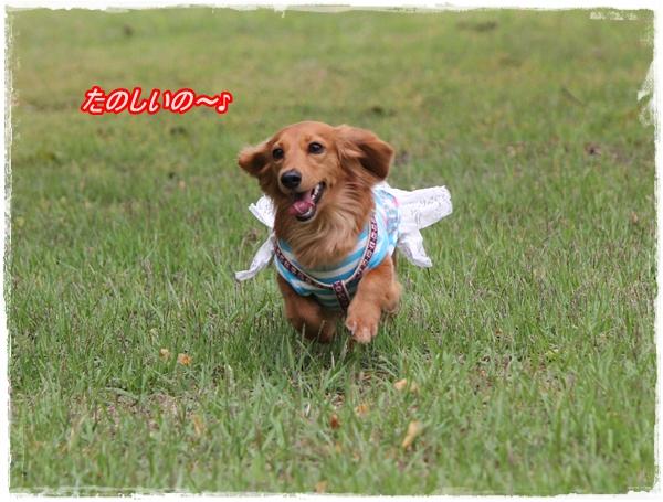 IMG_4200-1.jpg