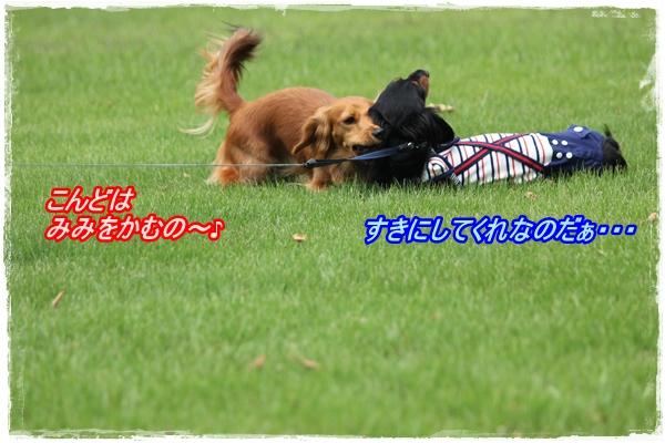 IMG_4358-1.jpg