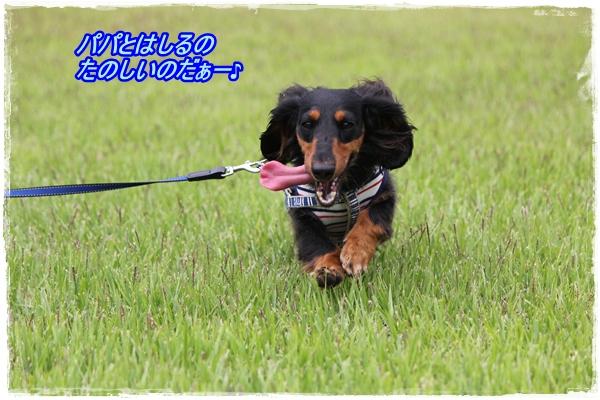 IMG_4409-1.jpg