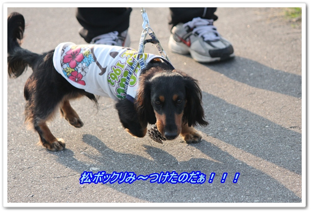IMG_4549-1.jpg