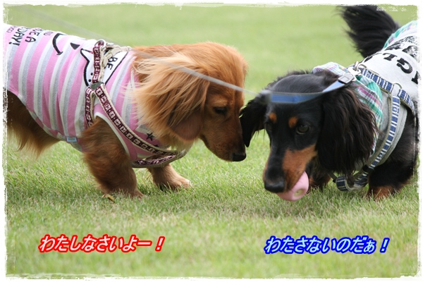 IMG_4654-1.jpg
