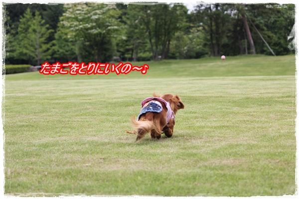 IMG_4669-1.jpg