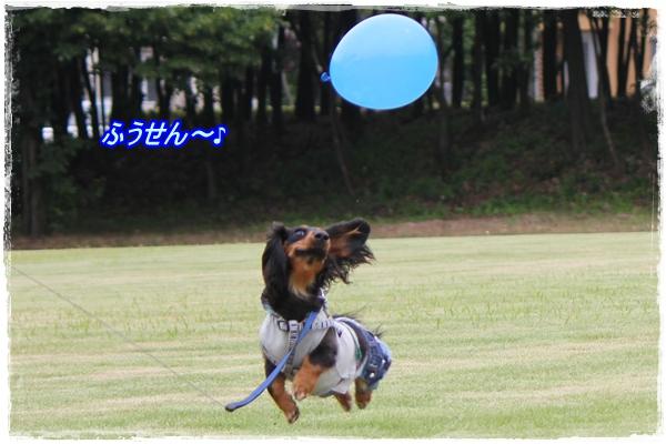 IMG_4910-1.jpg