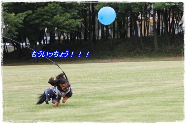 IMG_4911-1.jpg